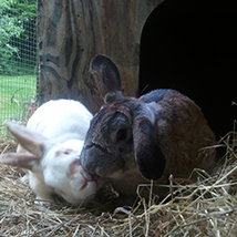 Bunny love*